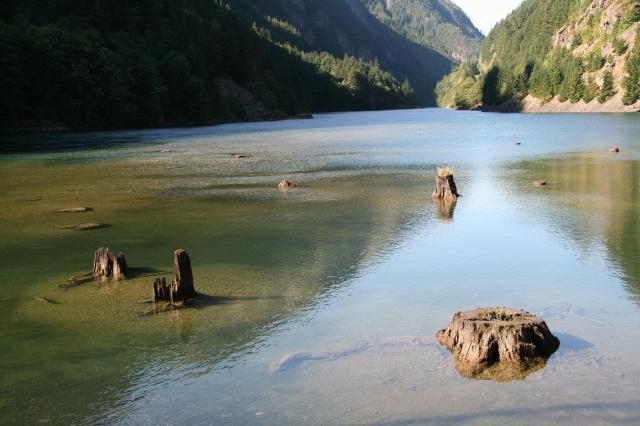 Boomstammen in het water