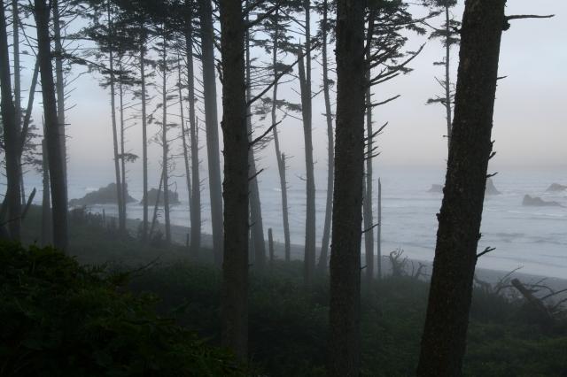 Ruby Beach bij mist 2